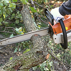 tree-trimming-services-ermu.png