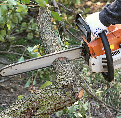 Person safely trimming tree with chainsaw